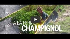 La ferme Champignol : une agriculture biologique, sans pertes, avec plus de profit !