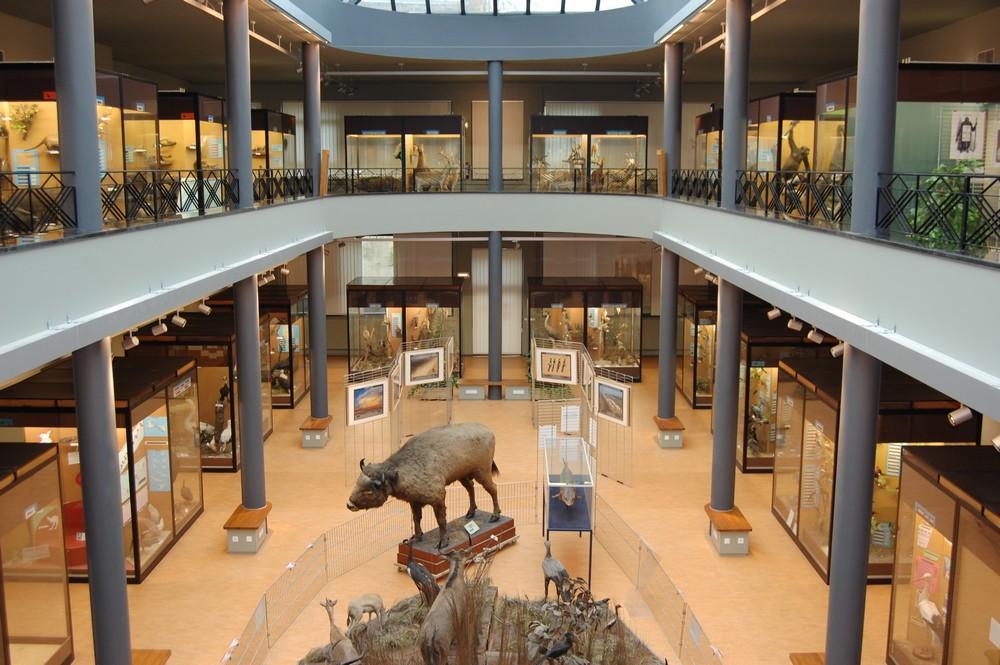 musée histoire Naturelle Mons